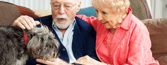 Máster en Terapia Asistida con Animales