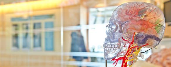 máster en neuropsicología clínica
