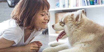 Terapia-Animales